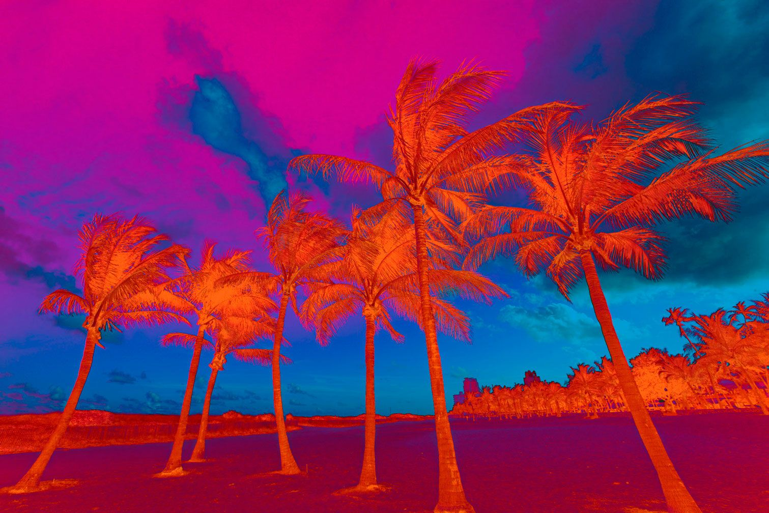 Horizontal Psychedelic Palm Trees in Orange Blue Pink