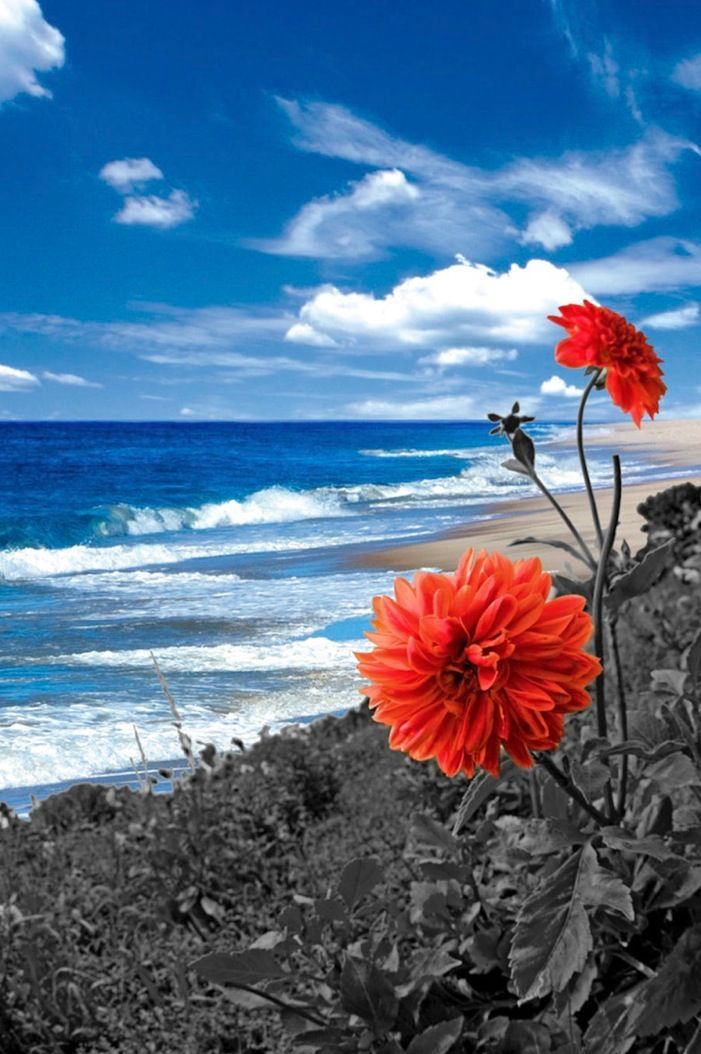 Red Flower on the Shore