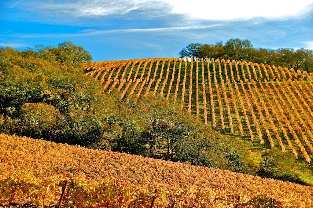 1hills_of_vineyards_2