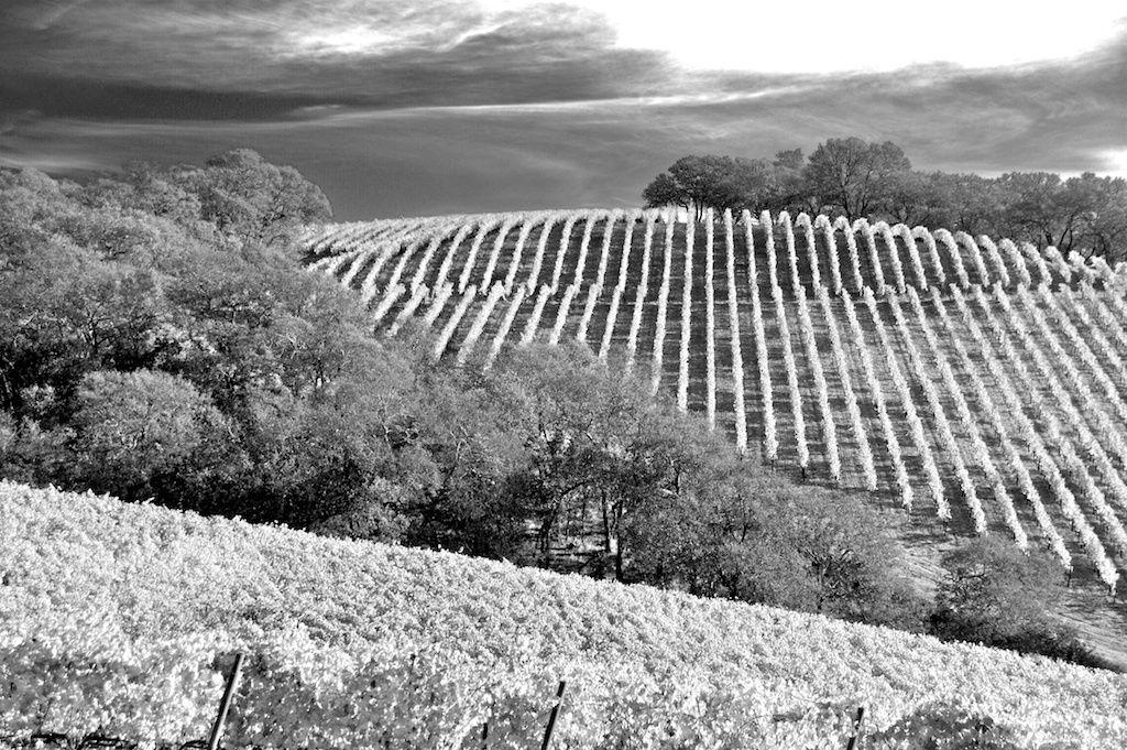 1hills_of_vineyards_b_w_2