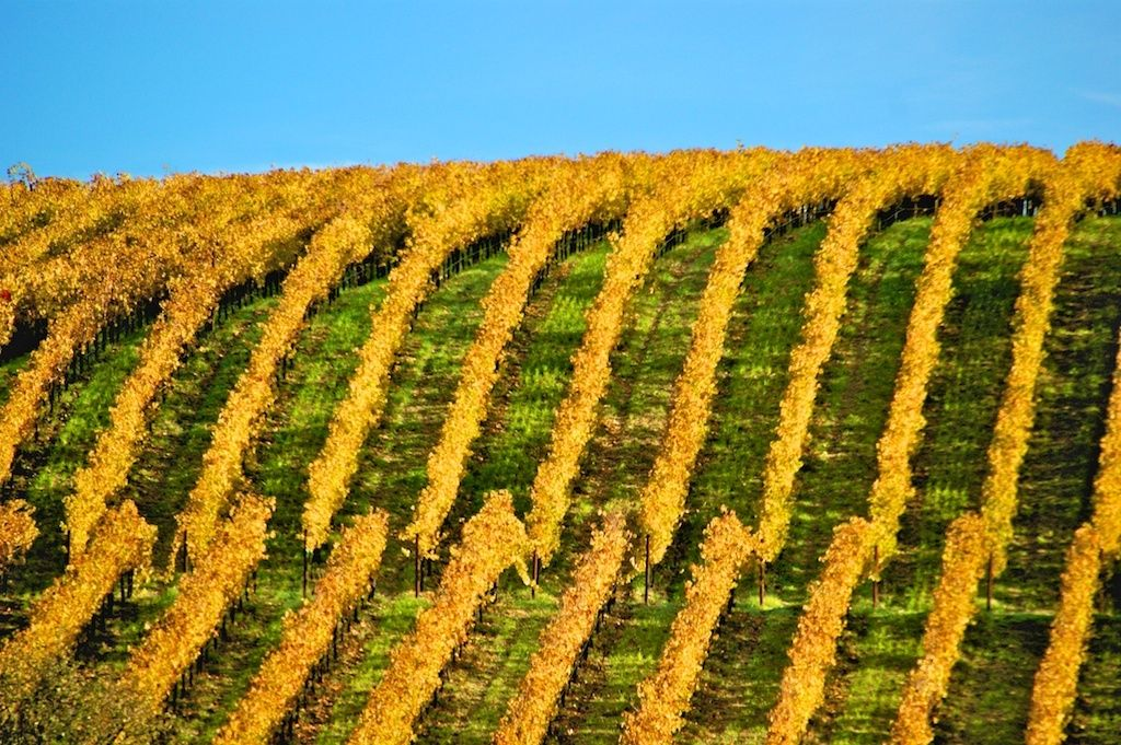1hills_of_vineyards_1