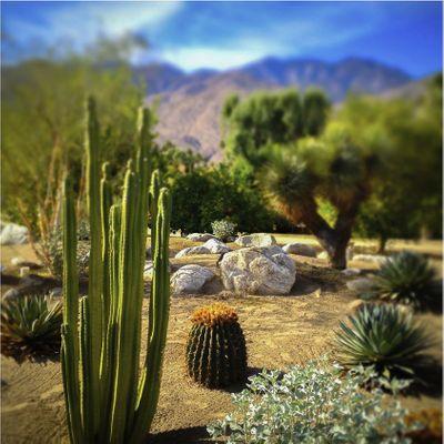 desert photo.jpg
