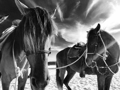 Horse2 WEB.jpg