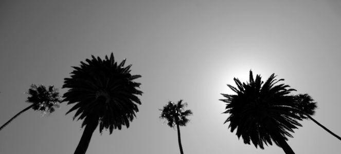 Palm Sky 2