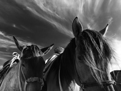 HORSES TIGHT BW WEB.jpg