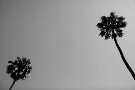 Palm Sky