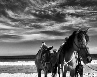 Horses1 web.jpg