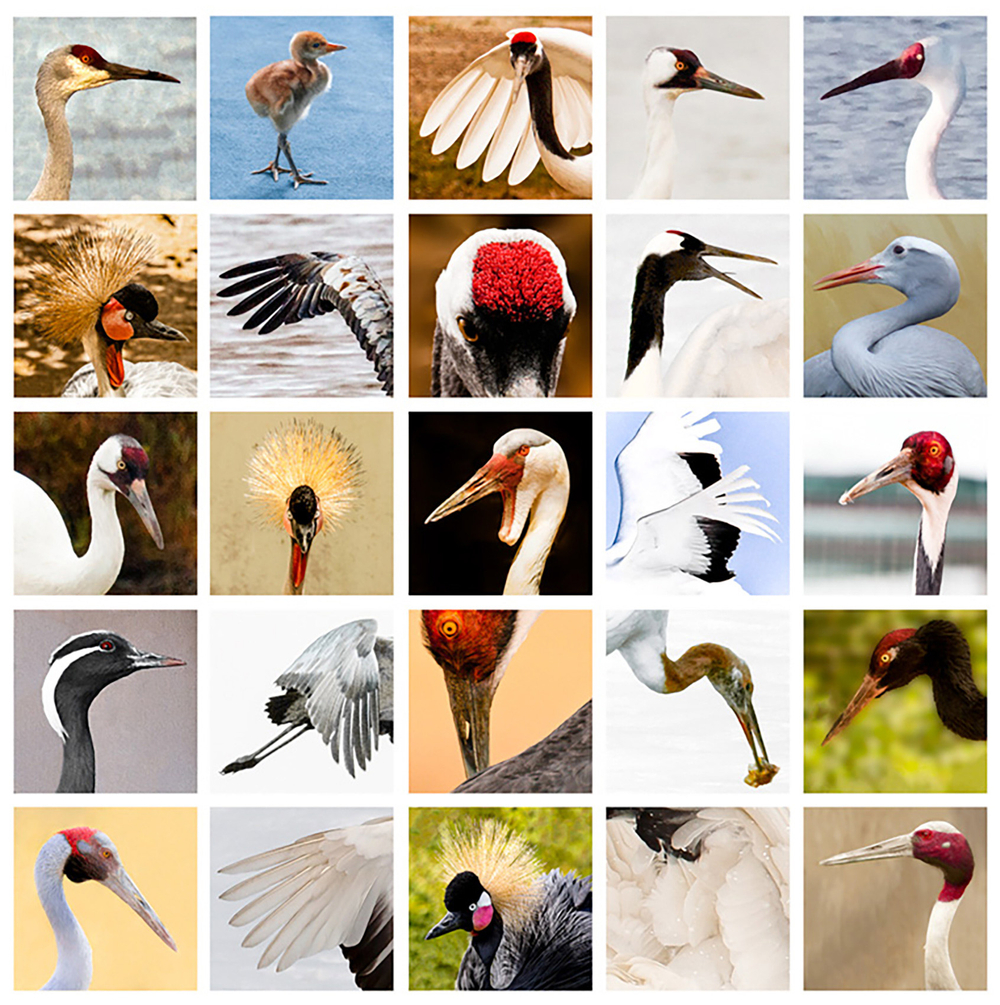 Cranes-of-the-World.jpg