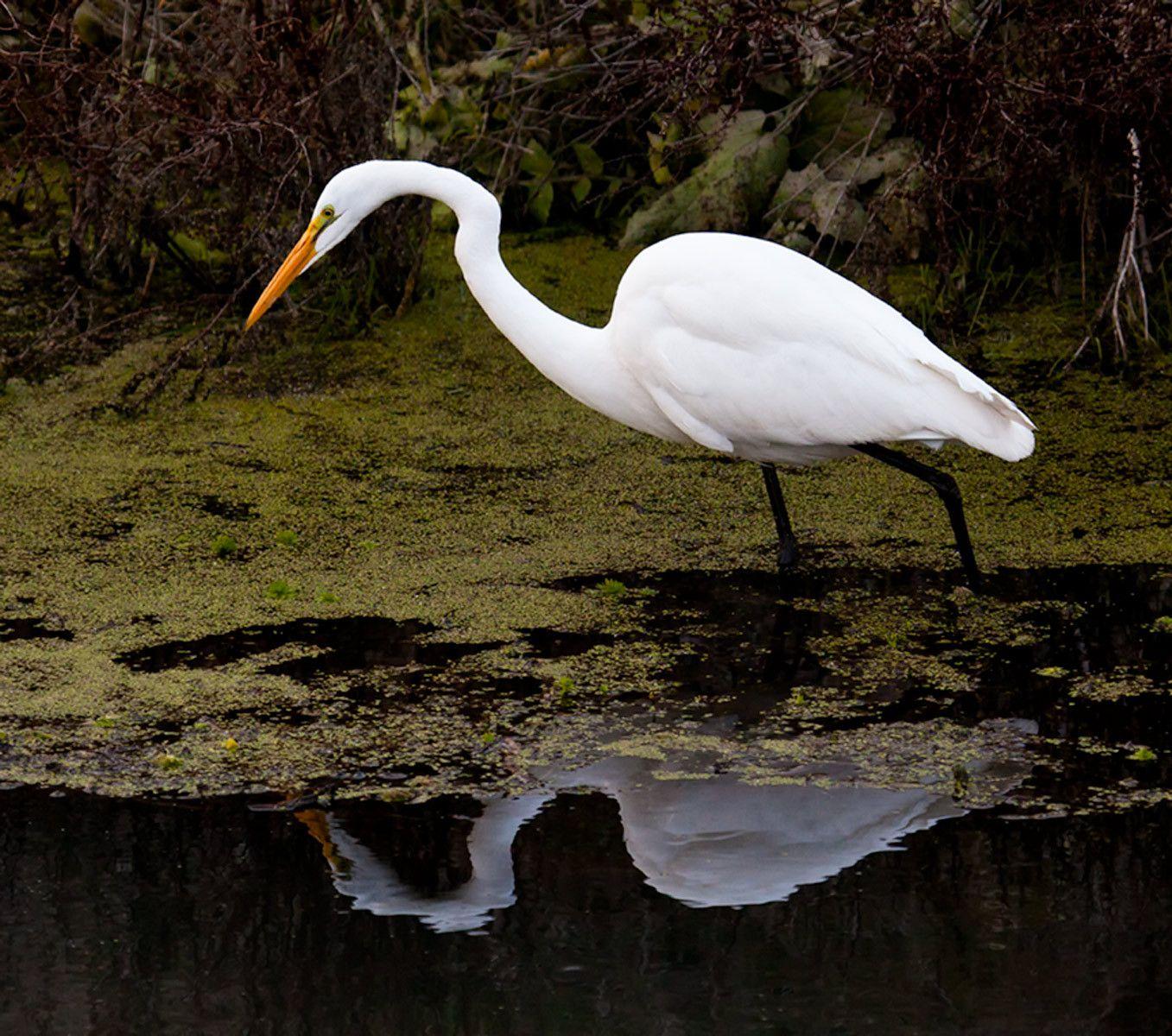 Egret III, California Delta