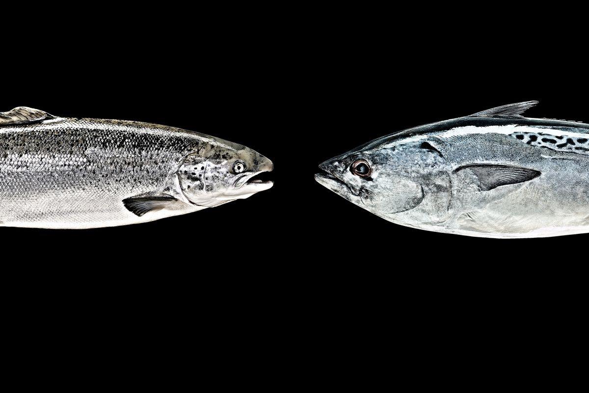 FishHeads_Workbook.jpg