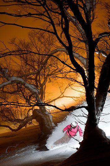 1nm_night_forest_valverde1_niseko_japan.jpg