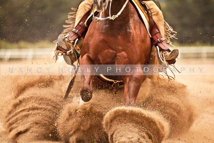Sport Equine