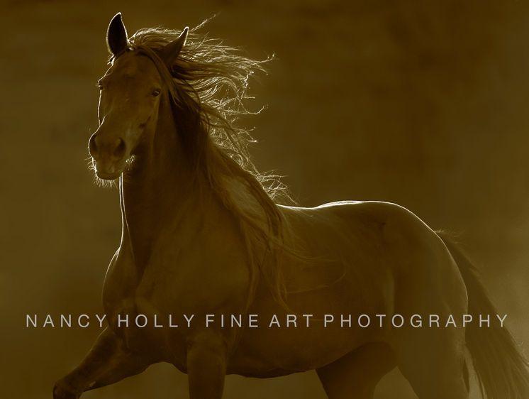 Portrait of a Mustang II