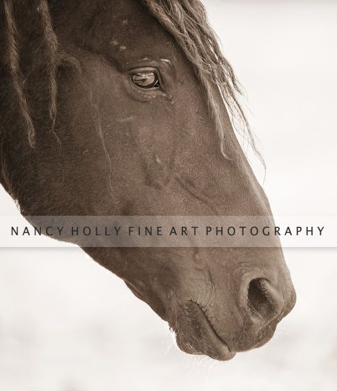 Portrait of a Mustang I