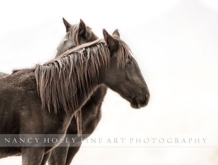 ~ HORSE WHISPER ~