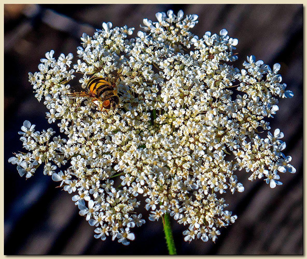 Bee-licious