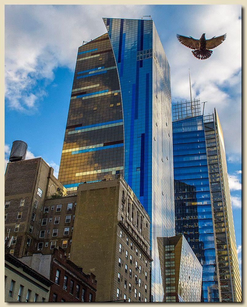 Bird & Curved Building
