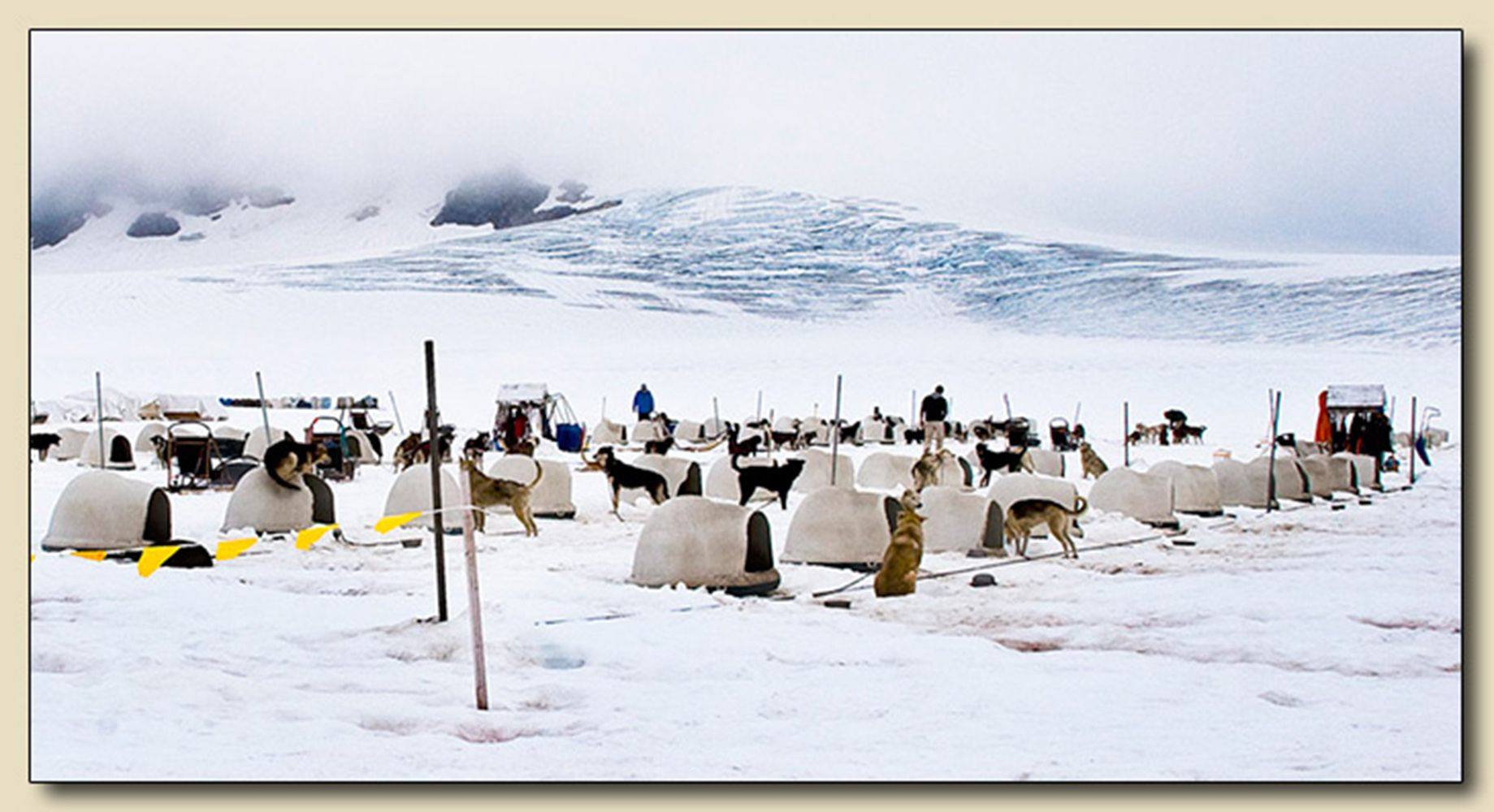 Dog Sled Camp