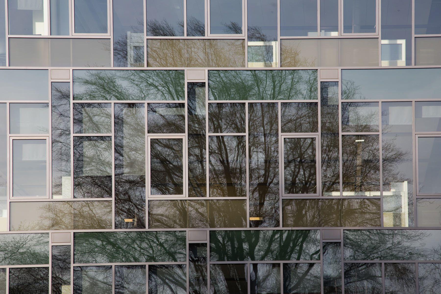 tree reflection portland oregon