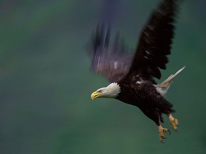 4_0_125_100108__Eagle_TIB.jpg