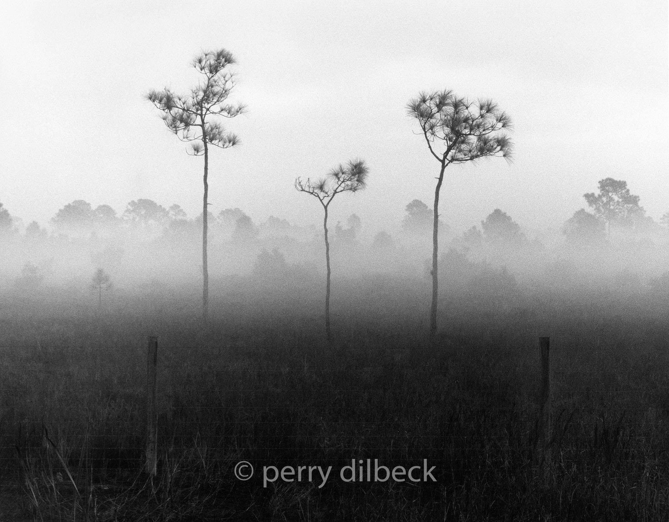 treesfog1Rb.jpg