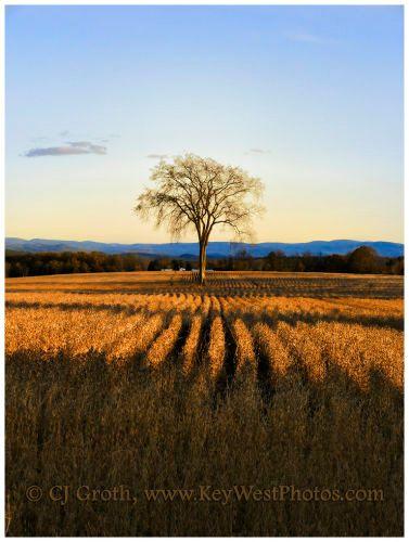 1lone_tree