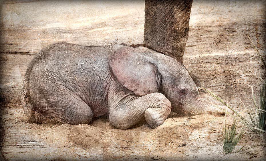 Sand Nap