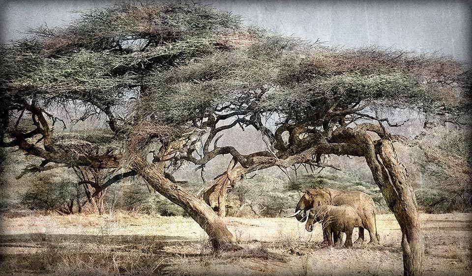 Elephant Arch