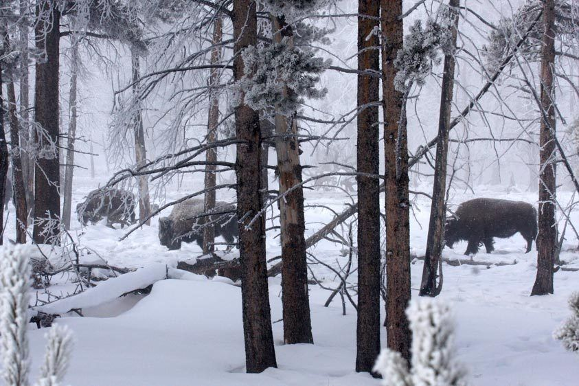 Yellowstone in Winter, Image #2