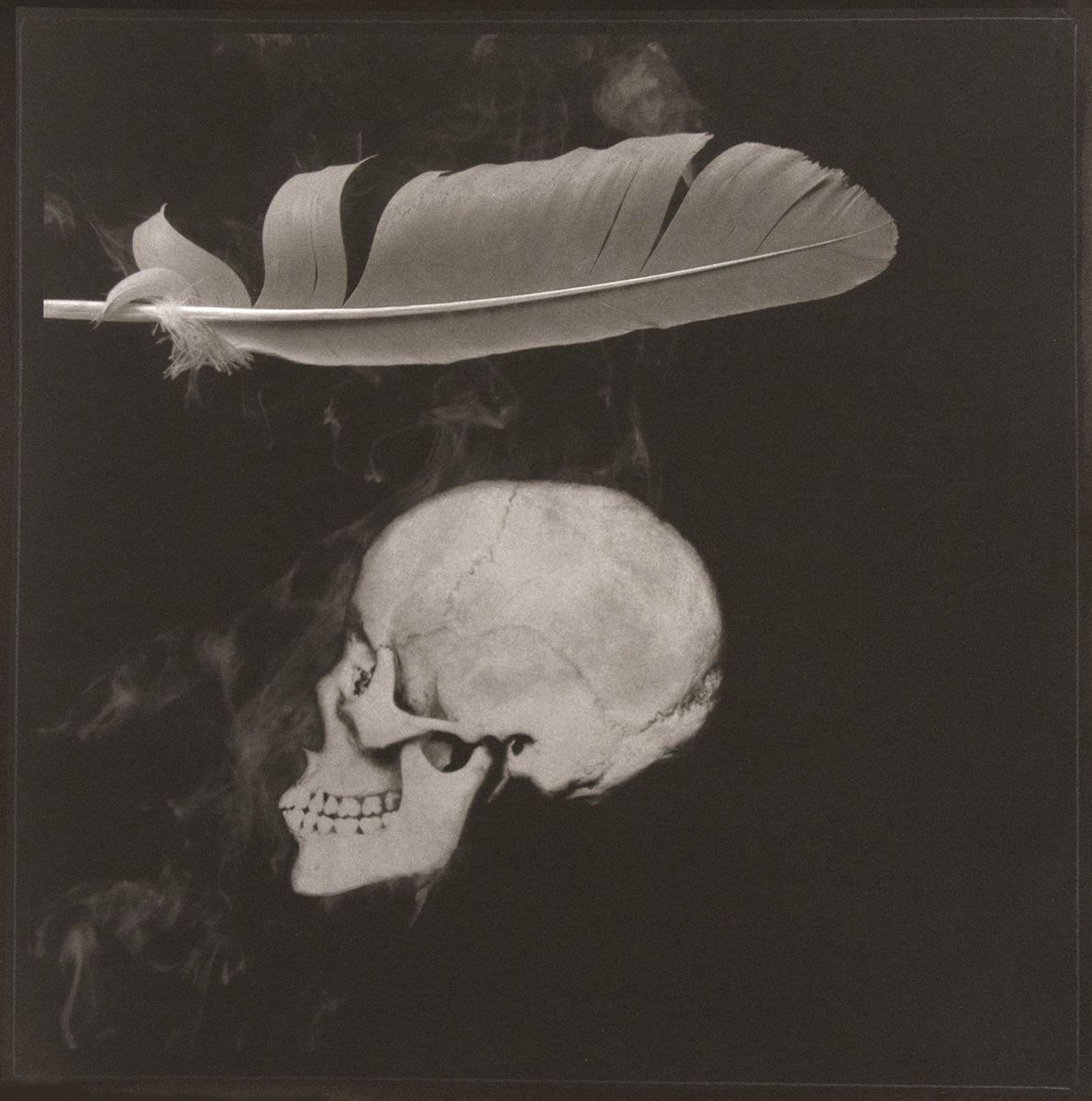 1492, FEATHER SERIES (2 OF 5), platinum photograph 1992