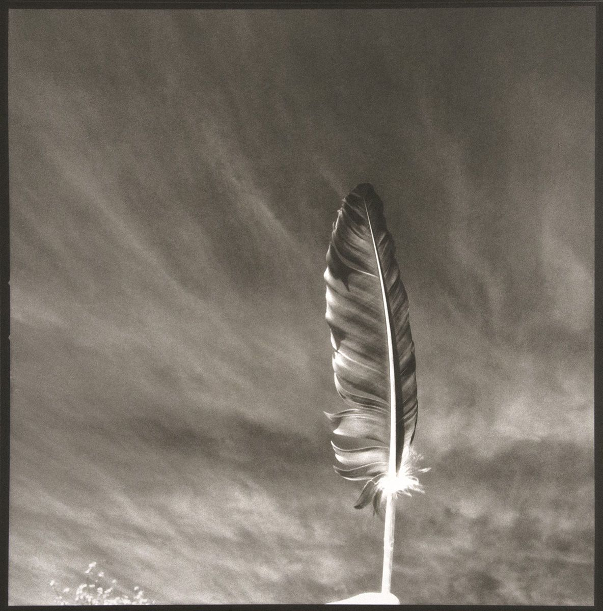 1491, FEATHER SERIES (1 OF 5), platinum photograph 1992