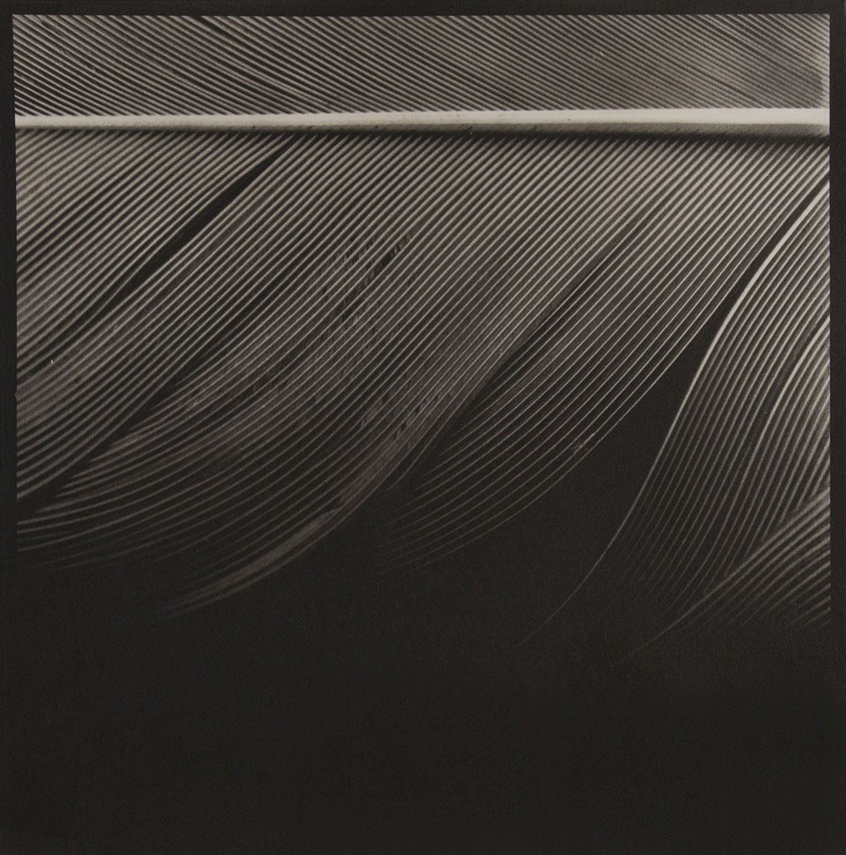 ELDERS, FEATHER SERIES (4 OF 5), platinum photograph 1992