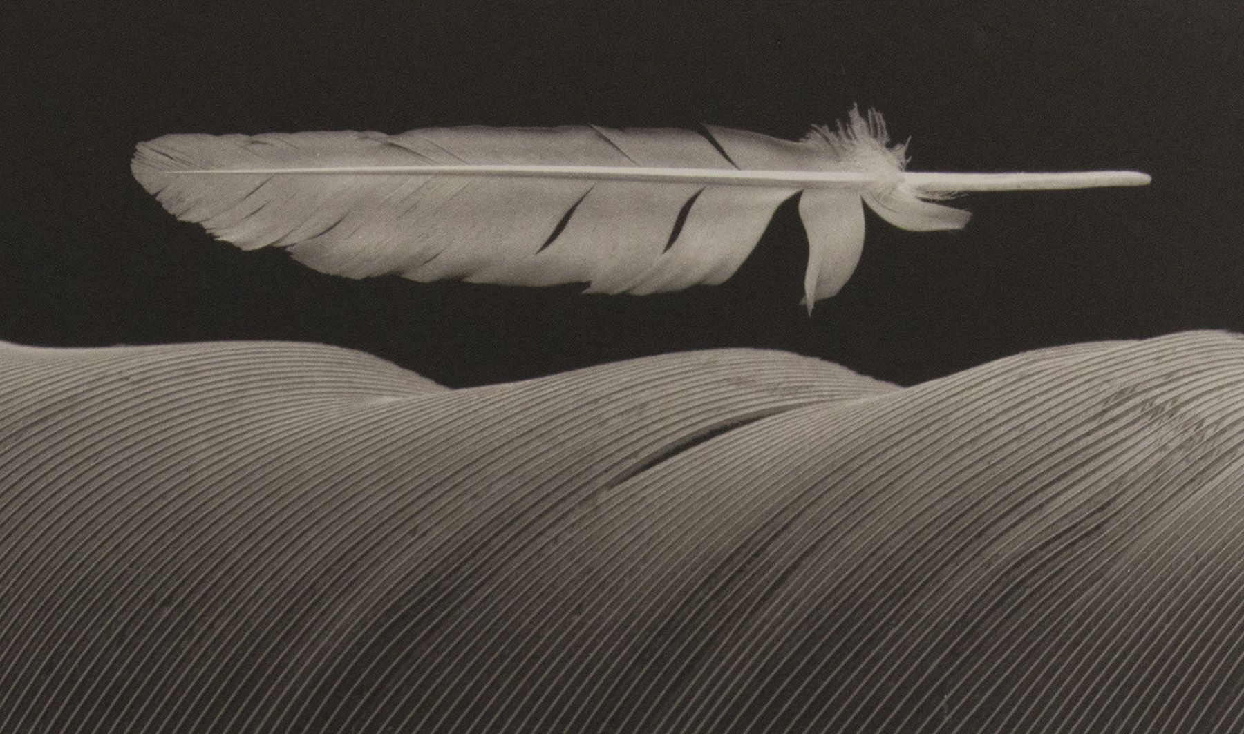 CIRCLE OF REBIRTH, FEATHER SERIES (3 OF 5), platinum photograph 1992