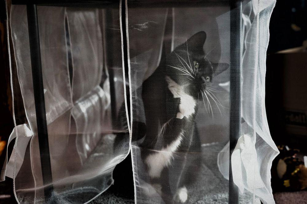 1_0_74_101_05_pets_connecticut_tuxedo_cat_megan_stevens.jpg