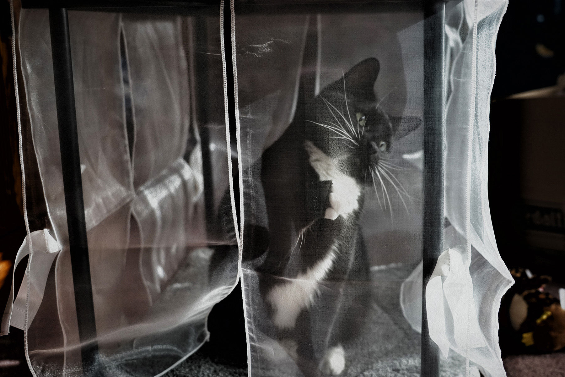 The Cat in Black and White