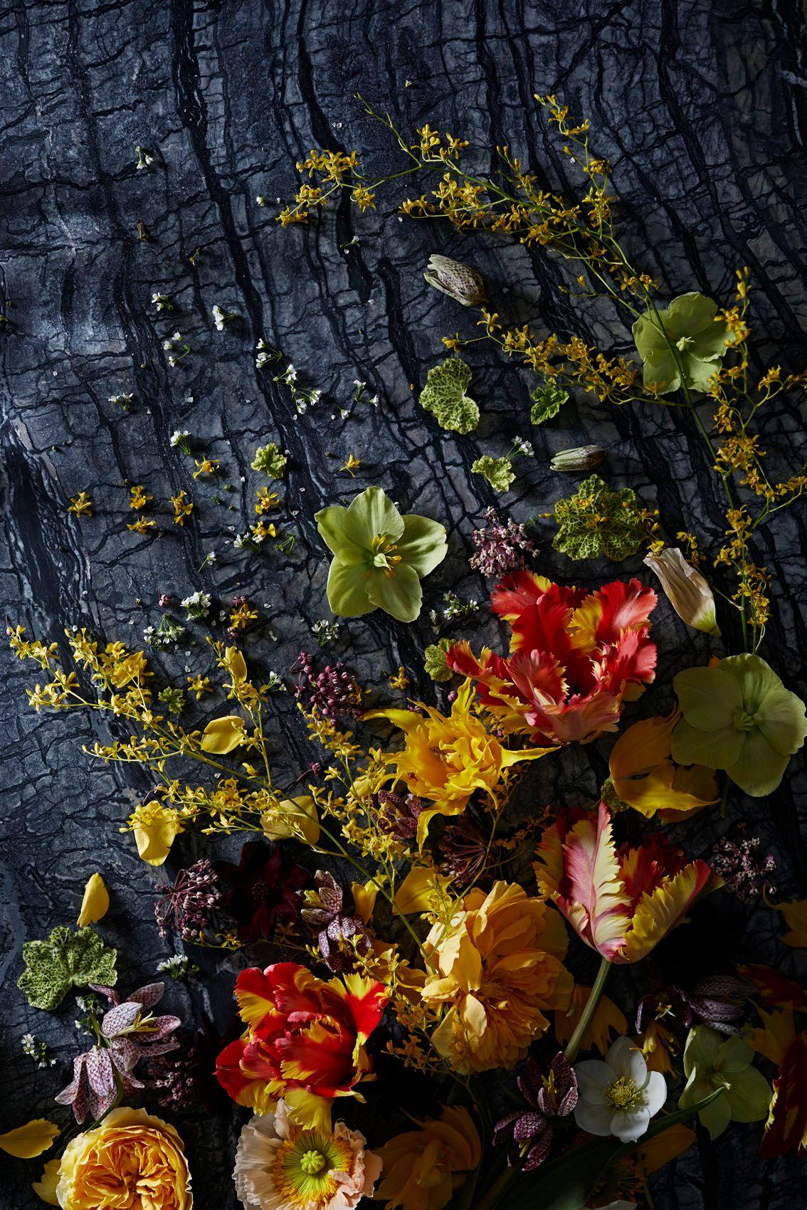 ChristopherWhite_Floral Study_1.jpg