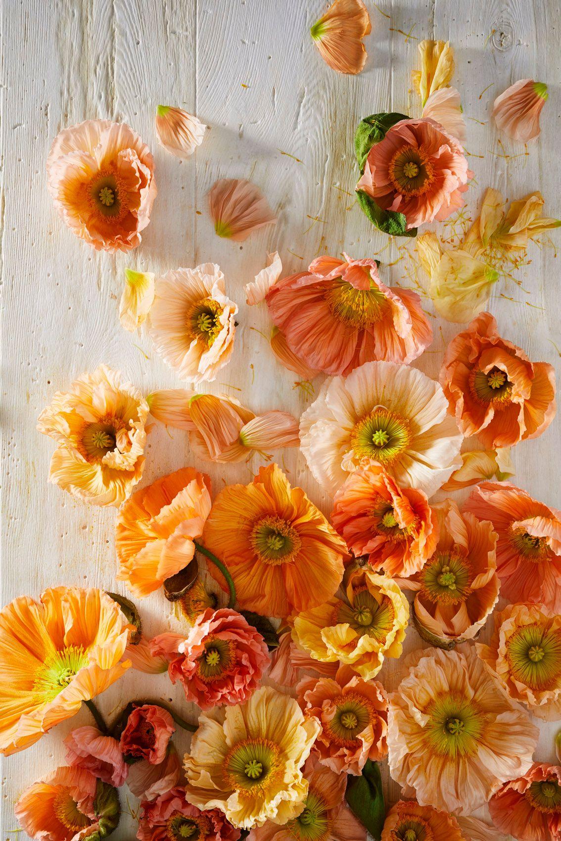 ChristopherWhite_Floral Study_3.jpg