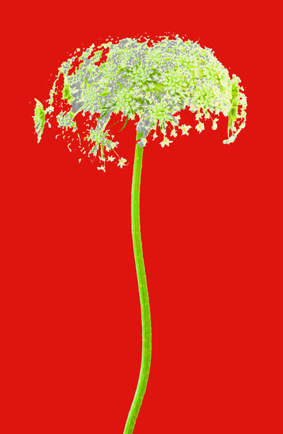 WRC_FlowerWithStemRed2_ 43x28.jpg