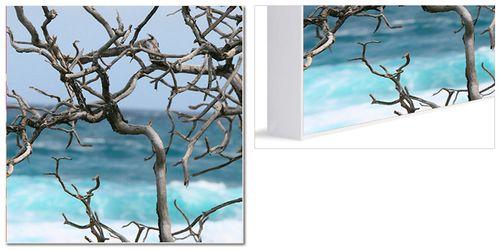 whiteboxframe2021.jpg