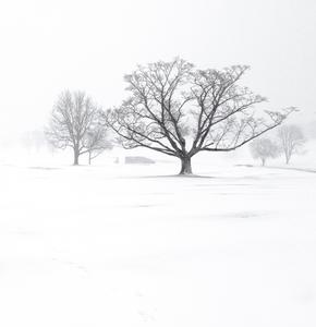 SNOW SERIES No.3