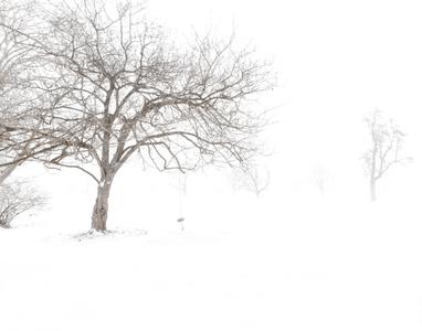 SNOW SERIES No.1