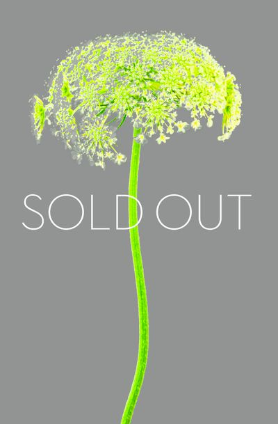 FLOWER_GRAY_SOLDOUT.jpg