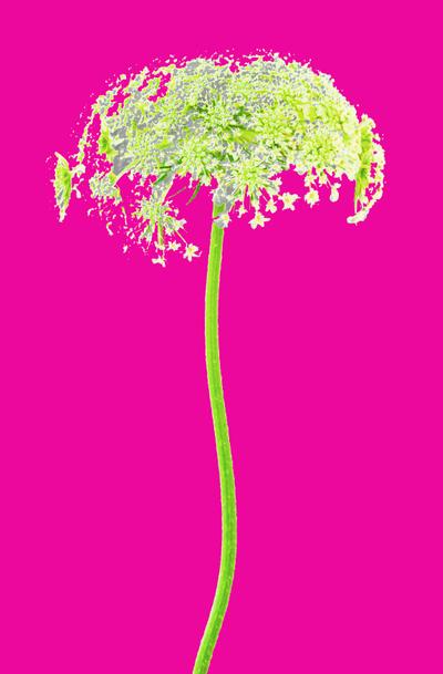 WRC_FlowerwithStemPINKPROOF2.jpg