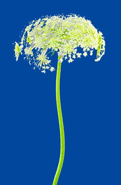 WRC_FlowerwithStemBLUEedit for PROFILES PRINTING2.jpg