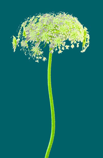 WRC_FlowerwithStem_teal edit.jpg