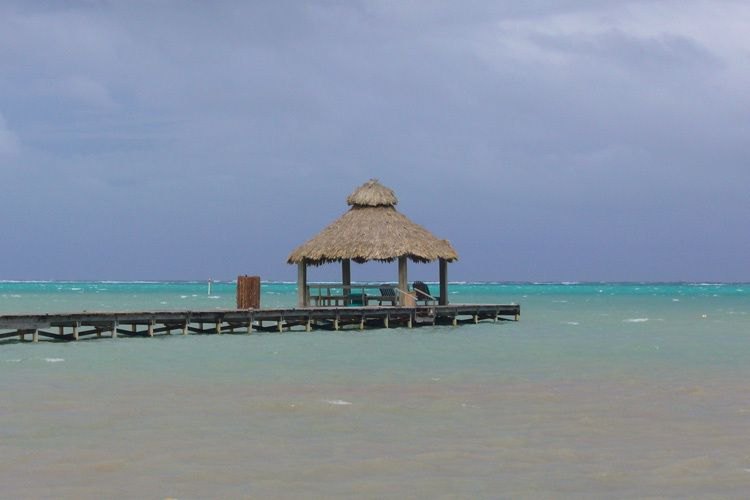 Belizean Thatch