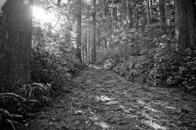 Hakone Forest