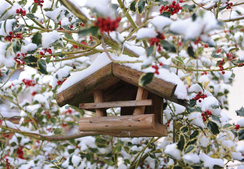 Hager Bird House