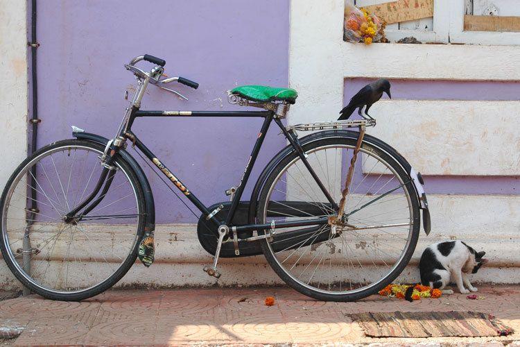 Crow, Bike & the Cat