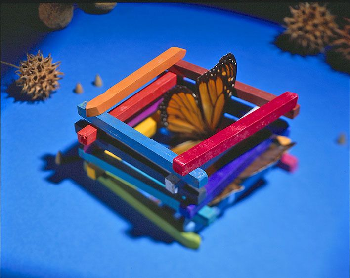 1Chalk_Butterfly_Seedpods